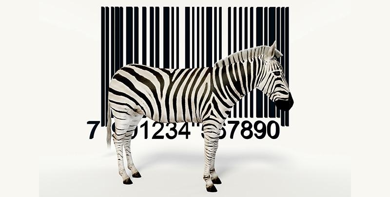 surdoué zebre magali barcelo